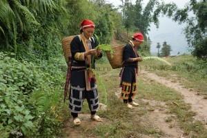 Представители национальности Хмонг (Kmong) Сапа Вьетнам