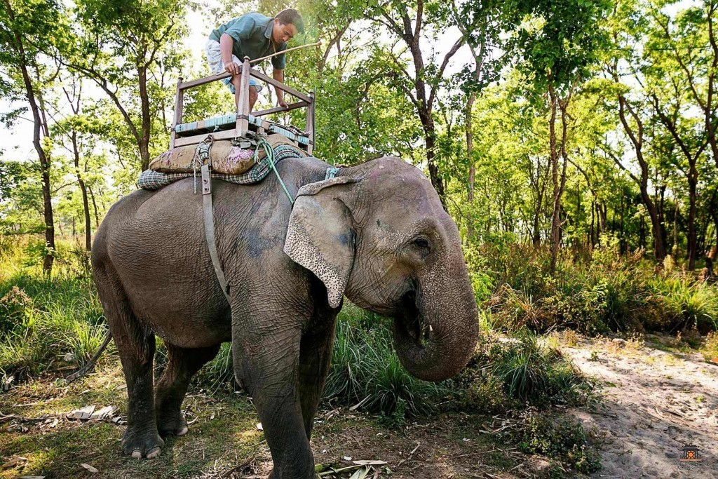25-chitwan-national-park-travel-images